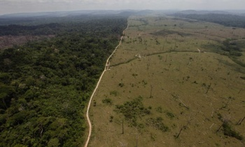 Deforestation in Brazil's Para state. Andre Penner/AP